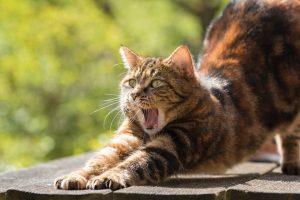 cat-814952_960_720