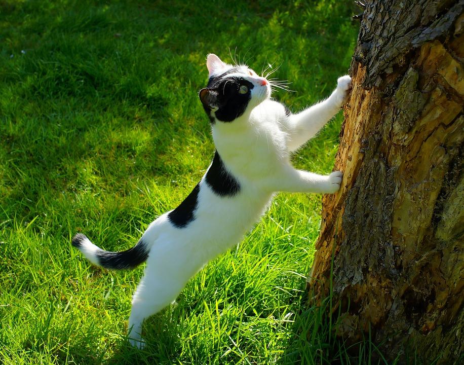 cat-1365643_960_720